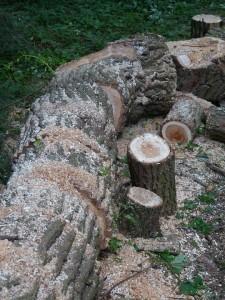 Natürlicher Rohstoff Holz - Pixabay